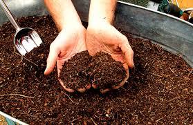 Хризантема садовая многолетняя: посадка и уход + фото