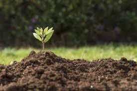 Уборка картофеля в 2019 году