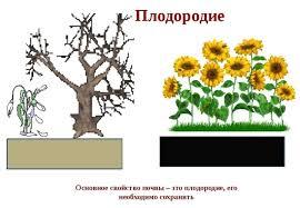 Проточный водонагреватель для душа на даче