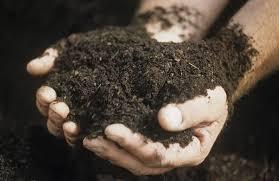 Томат гном: характеристика и описание сорта