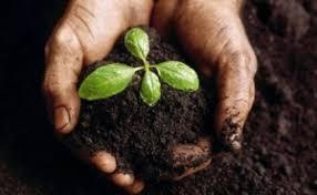 Когда сеять баклажаны на рассаду