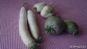 Овощные культуры: горькая редька, сорта, виды, фото, названия