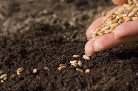 Теплая грядка для огурцов: как сделать осенью