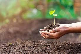 Рецепт салата из зеленых помидор с чесноком