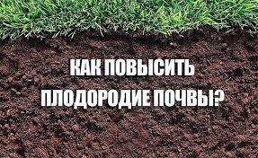 Редька по-корейски: 10 рецептов
