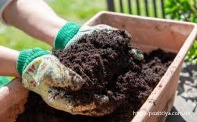 Облепиховое масло: лечебные свойства и применение