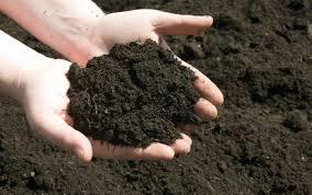 Оформление бассейна на даче + фото