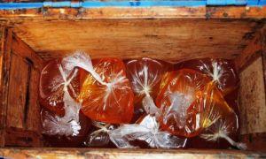 Осенняя подкормка пчел: стимулирующая, когда кормить, как подкормить старым медом, медовой сытой