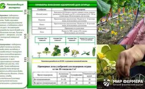 Подкормка тыквы в открытом грунте: в период цветения, плодоношения, чтобы хорошо росла, органические, минеральные удобрения
