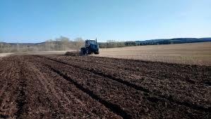 Салат из зеленых помидоров с перцем на зиму