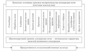 Тыква витаминная мускатная: описание сорта и фото, отзывы, выращивание
