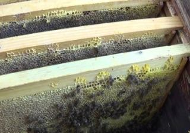 Сборка гнезда пчел на зиму: зимовка на улице, сокращение гнезда, как формировать, когда и как собирать, сколько рамок оставлять в улье