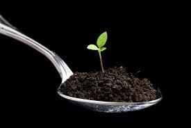 Перец подарок молдовы: характеристика и описание сорта