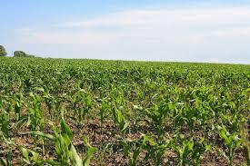 Посев огурцов в 2019 году