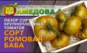 Томат ромовая баба: отзывы, фото, урожайность