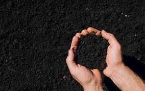 Сорт картофеля крона: характеристика, отзывы