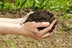 Колонновидные плодовые деревья: фото, сорта