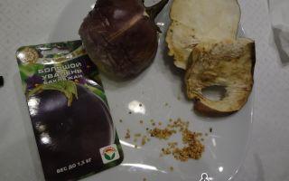 Баклажан большой увалень: описание, фото, отзывы