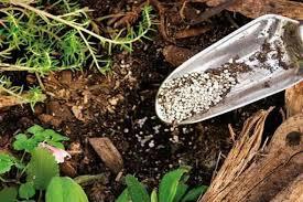 Сорта моркови с тупым кончиком