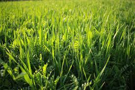 Как убрать сорняки с заросшего участка