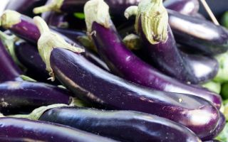 """Баклажан """"длинный фиолетовый"""": описание, фото, отзывы"""
