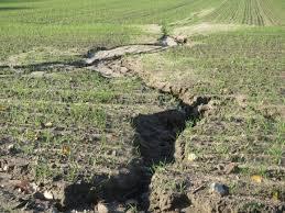 Томат Роза ветров описание и характеристика сорта урожайность с фото
