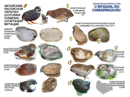 как узнать породу птицы по фотографии восток предлагает