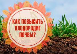 Лучшие осенние сорта яблонь для средней полосы