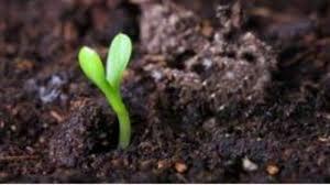 Депротеинизированный гемодериват крови