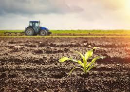 Лимон при гипертонии: действие фрукта на организм