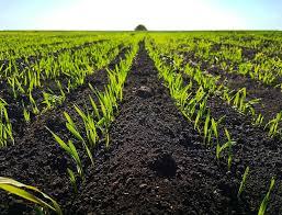 осенняя обработка пчел от клеща бипином