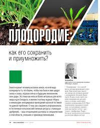 газонные сорняки фото и название